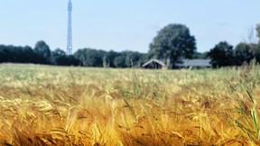 Boeren, burgers, buitenlui