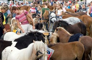 Paardenmarkt Goor van start