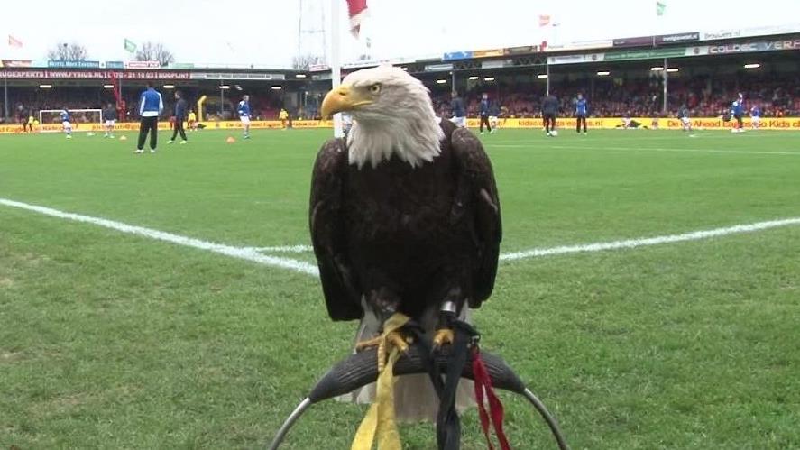 Zeearend Harly nog geen 100 meter van stadion Eagles in ...