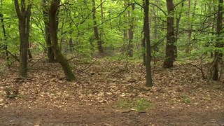 Overlevingstocht in de bossen bij Hardenberg