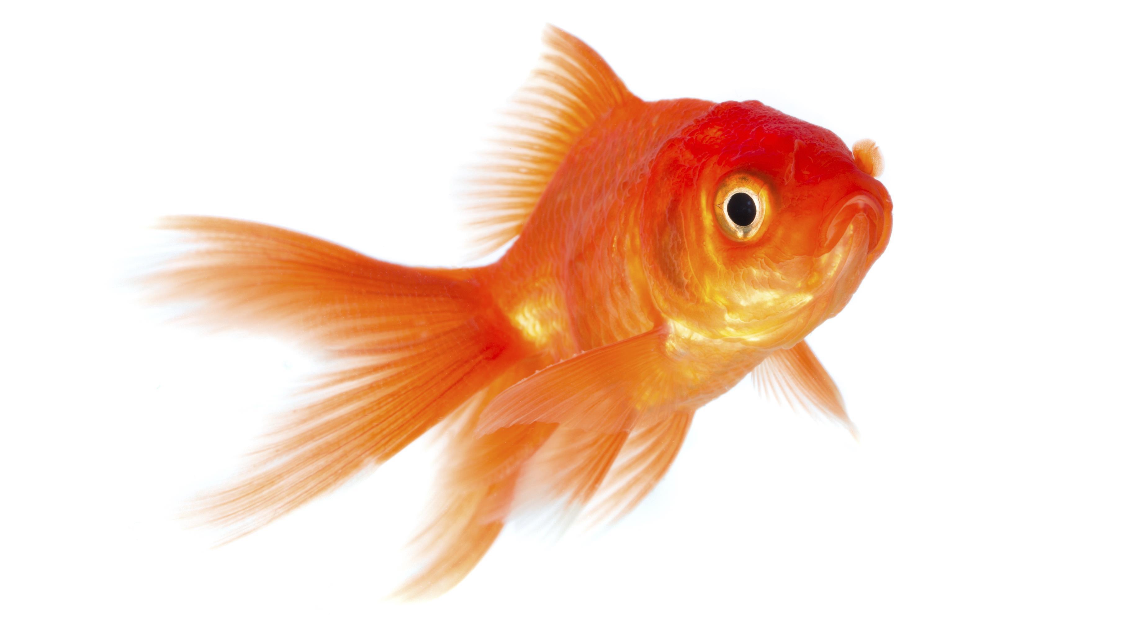 Fishbeam Software Willkommen