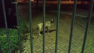 De hond werd vastgebonden aan het hek