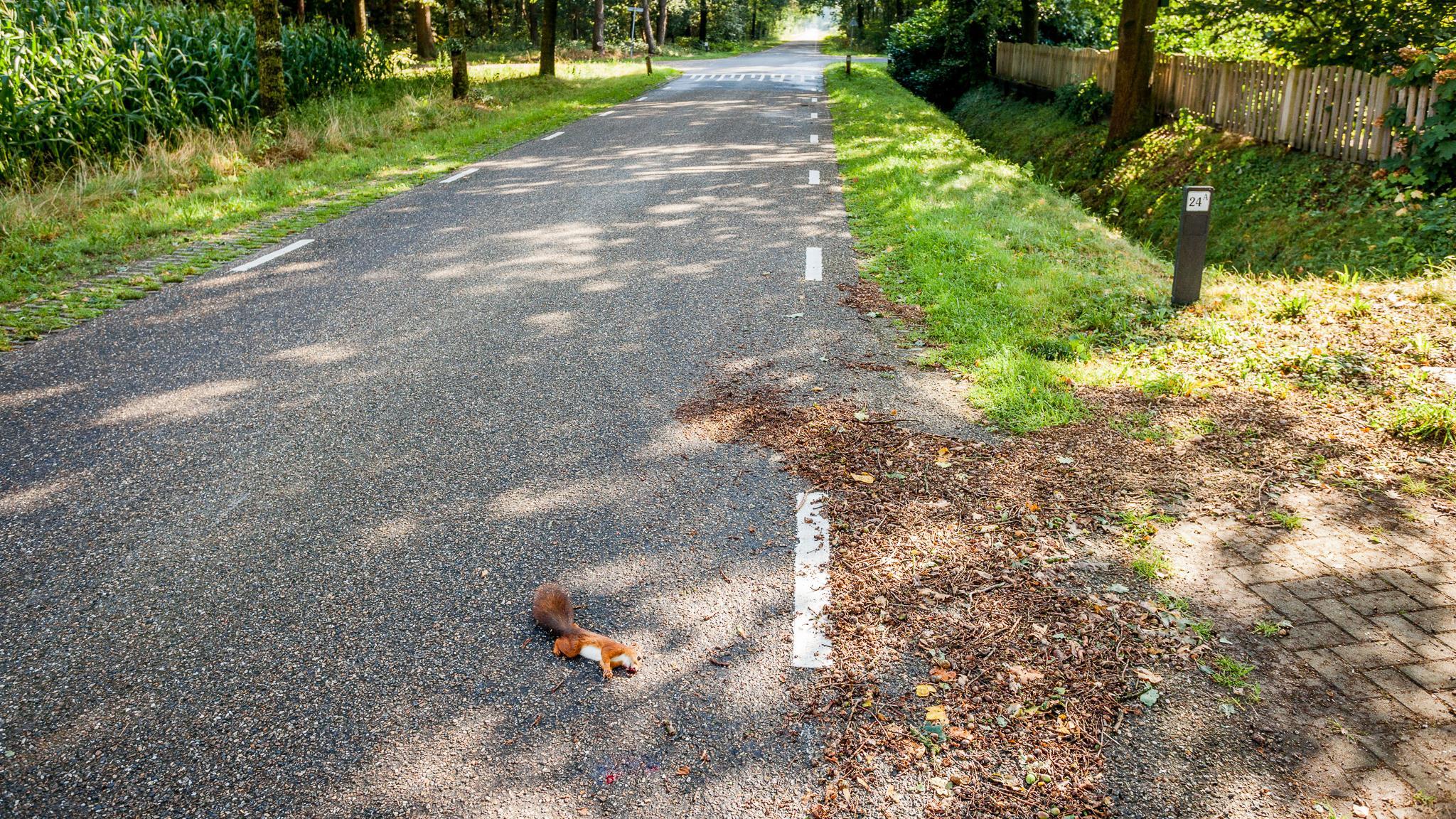 Zomerstorm Bentelo: blikseminslag, afgewaaide takken én eekhoorn uit ...: www.rtvoost.nl/nieuws/default.aspx?nid=251147&cat=1