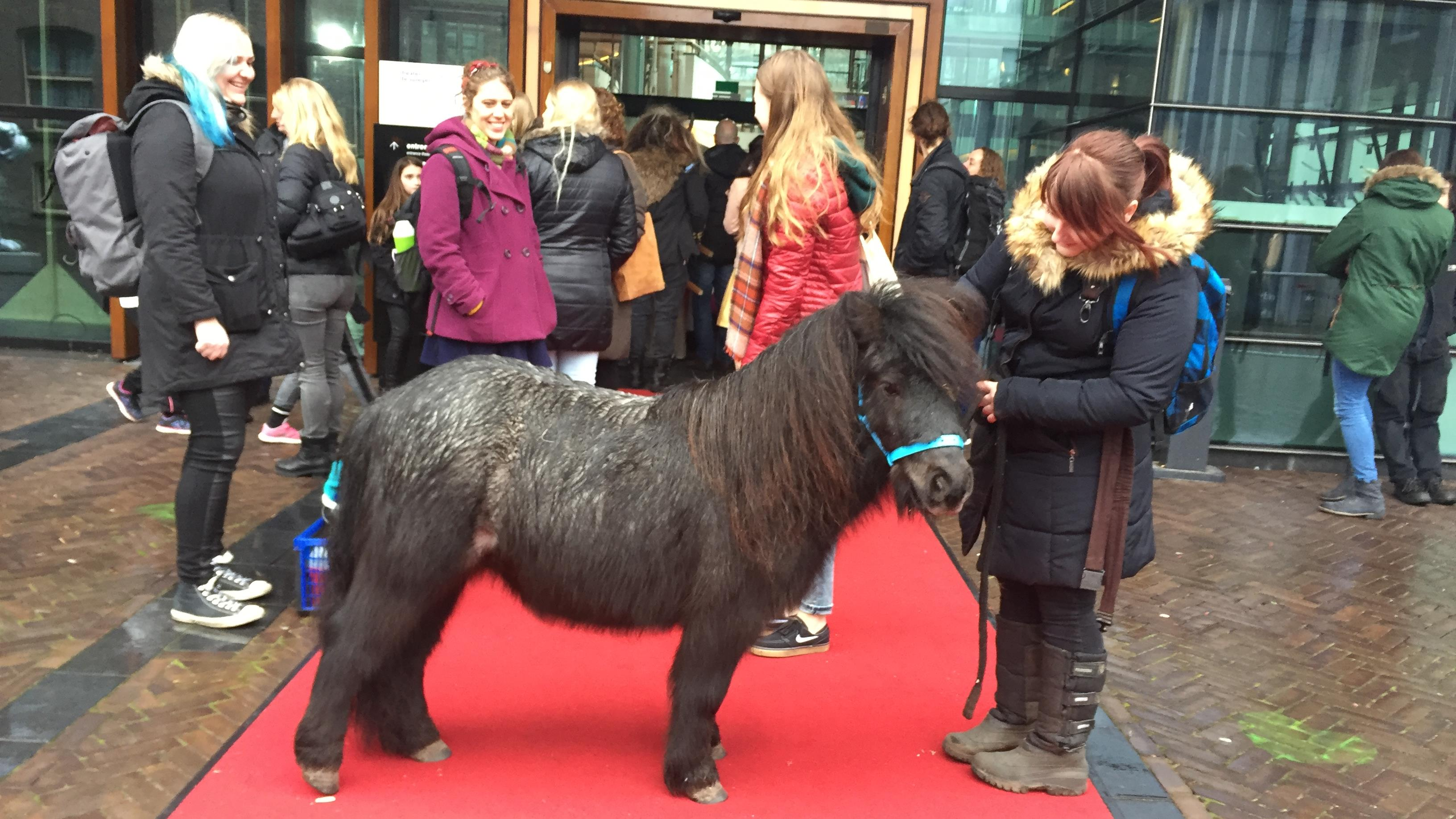 Wat doet die pony op de rode loper bij theater de spiegel in zwolle - Foto rode loper ...