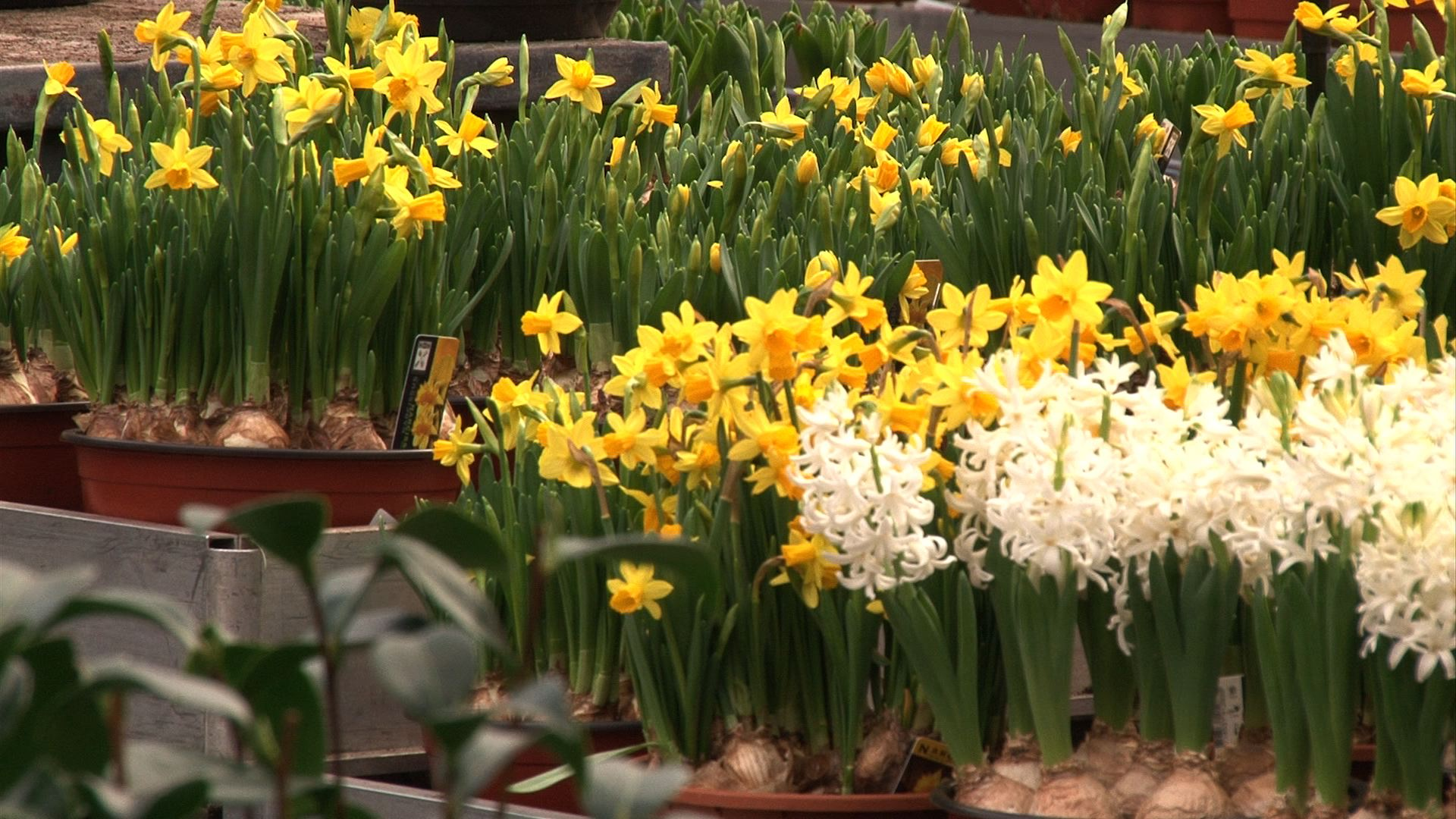 Drukte in het tuincentrum en vieze handen het is lenteweer for Borghuis deurningen