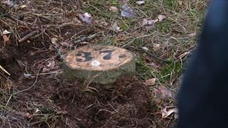 Geen grafmonument, maar een boomschijf op een graf in Haaksbergen.