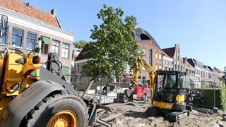 Eerder gingen zieke kastanjebomen aan de Thorbeckegracht in Zwolle tegen de vlakte