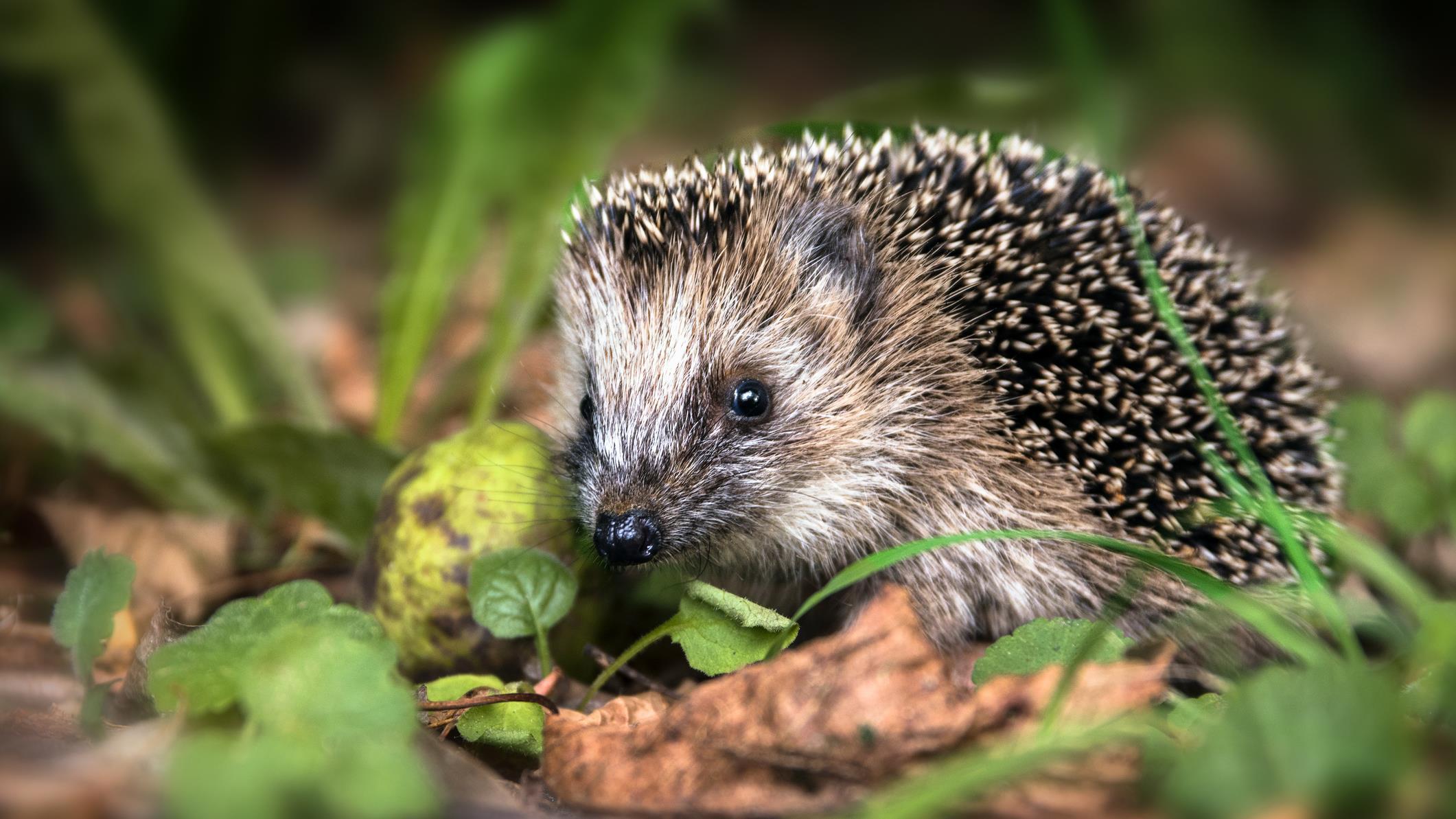 Raalte in landelijke top vijf wegens meldingen aangereden dieren.