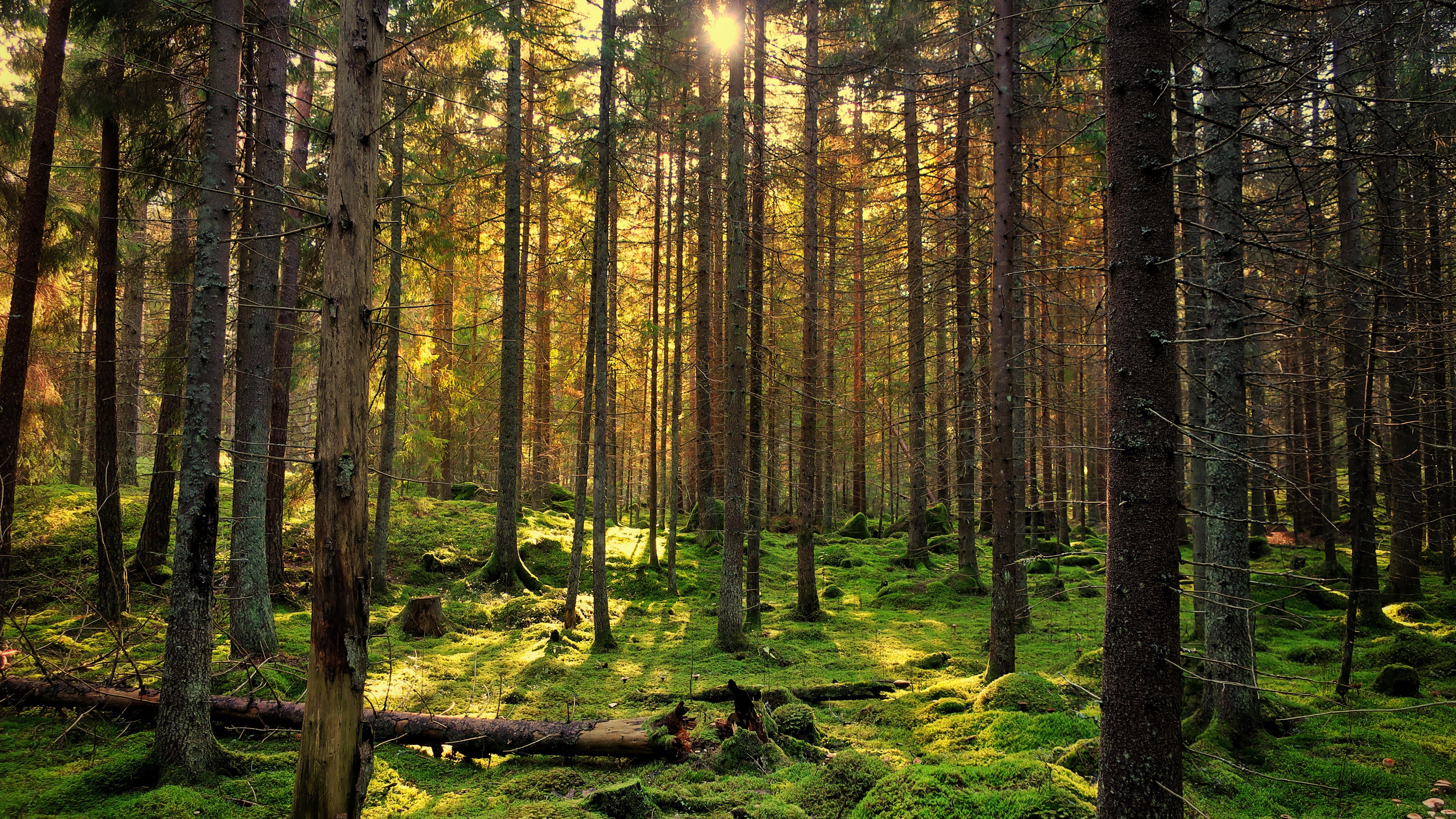 Provincie weet niet of alle Overijsselse biomassacentrales duurzaam hout stoken
