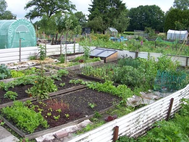 Voedselbank almelo gaat zelf groenten verbouwen for Groenten tuin