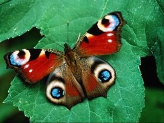 Vlindertelling in Overijssel