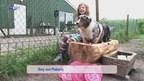 WK Dog Frisbee