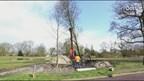 Omgewaaide bomen in Nijverdal weer overeind gezet