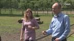 René en Angela Dijkman kwaad en verdrietig door mishandeling paarden