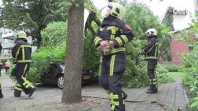 Boom op auto's in Hengelo