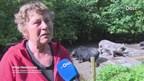 Hobby-boerin Jinke Hesterman in Welsum