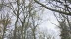 Video: Midwinterhoornblazen populair onder jeugd Oldenzaal
