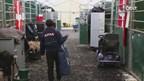 Internationale Para Dressuur top in Genemuiden rijdt voor kwalificatie Paralympics