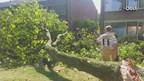 Brandweer zet zaag in afgevallen boomtak