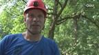 EK-boomklimmen naar grote hoogte in Deventer Worpplantsoen