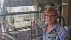 Vrouw wil papegaai terug
