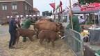 Pony- en paardenmarkt in Enter