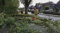Op de Nico Maasstraat in Hengelo viel een boom op de weg