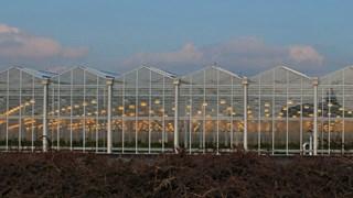 Glastuinbouwbdrijf krijgt oogstrobot