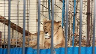 D66 Zwolle wil geen dieren meer in circussen