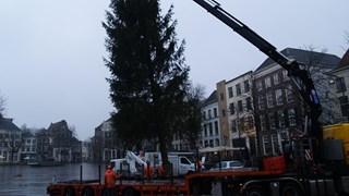 Deventer plaatst nieuwe kerstboom op de Brink