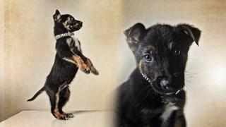 Politie-pup Battje