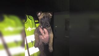 Politiehond Bronco aan begin eerste nachtdienst Borne