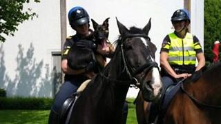 Politiepup Battje ontmoet de vrienden van de bereden politie