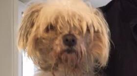 Verwaarloosd hondje gevonden in Almelo