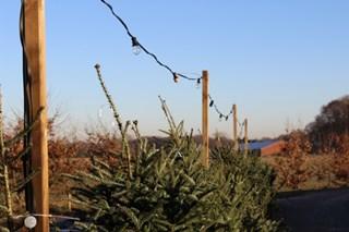Henk verkoopt al 25 jaar kerstbomen.