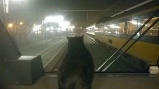 Kat Muts op de weg terug naar Coevorden