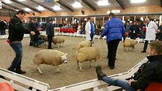 Afgelopen zaterdag was de schapenkeuring in Ambt-Delden