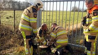 Brandweer bevrijdt ree in Hasselt