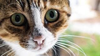 archieffoto kat