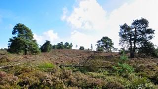 De Holterberg, onderdeel van Sallandse Heuvelrug