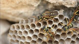 Insectenbestrijders