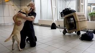 Stichting Signi Honden vanochtend op Schiphol