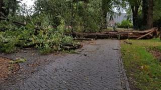 Flinke boom geveld in Markelo