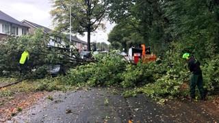 Boom valt op auto in Oldenzaal