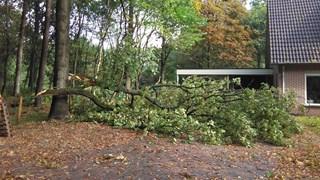 Vallende boom mist woonhuis in Stegeren