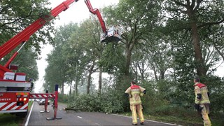 Gevallen boom geruimd in Vriezenveen