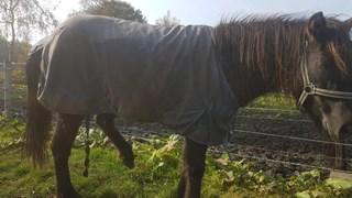 De in beslag genomen paarden en pony