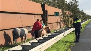 Heldhaftig optreden van Calijn en Sanne uit Enschede redden pony's langs snelweg A2