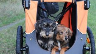 de honden Huub en Liska