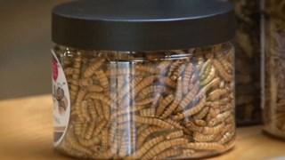 meelwormen voor consumptie